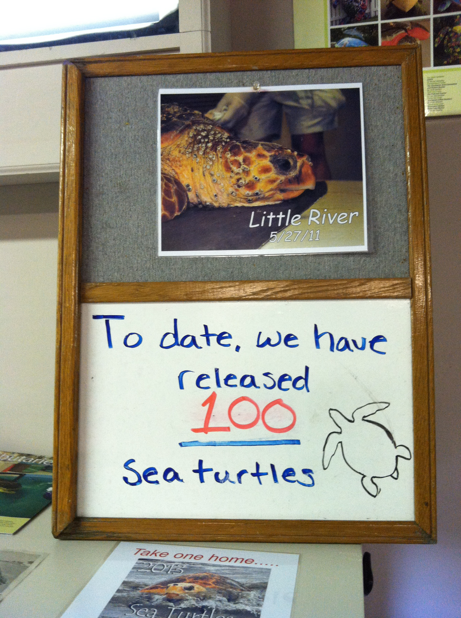 Turtle Count
