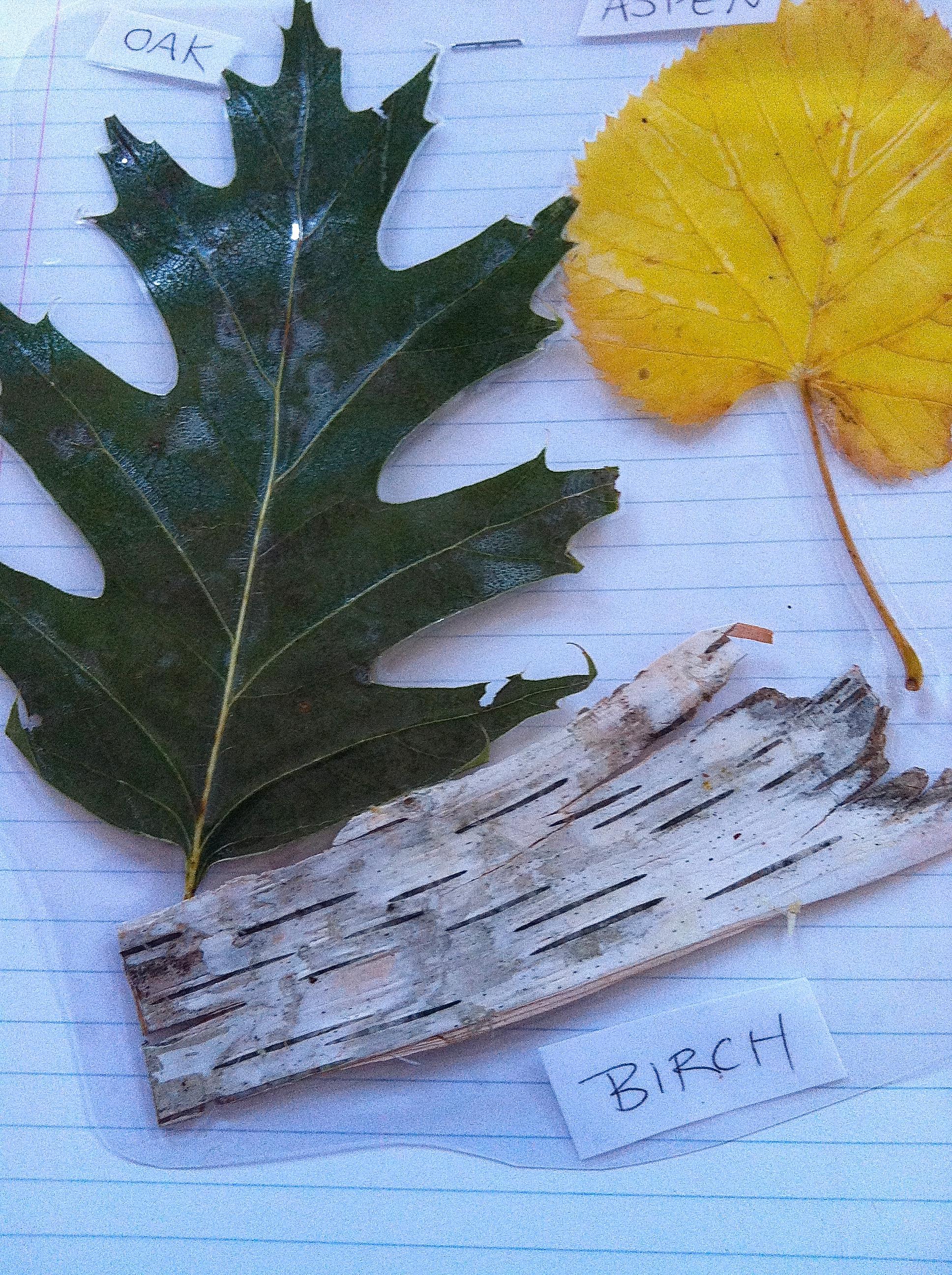 Leaf lamination
